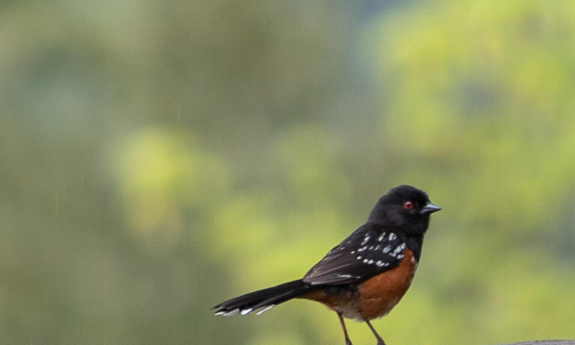 Bosco Birds